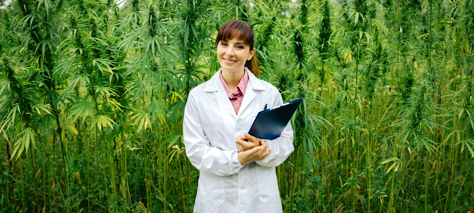 What is THC and CBD