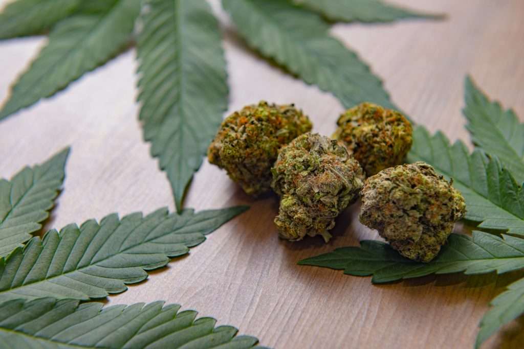 Dried cannabis nugs and leaves over wood background